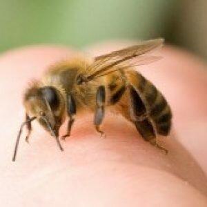 Укусы насекомых у детей. Первая помощь при укусах.