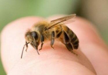 Укусы насекомых у детей. Первая помощь