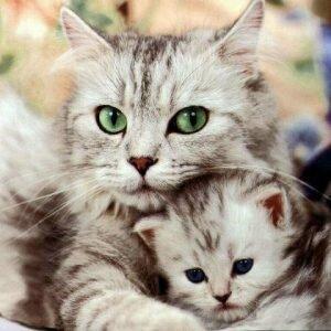 Какую пользу приносят кошки