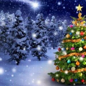 Почему на Новый год наряжают ёлку