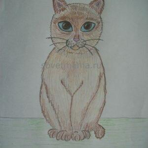 Как нарисовать кошку карандашом поэтапно для начинающих