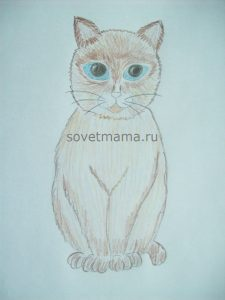 кошка6