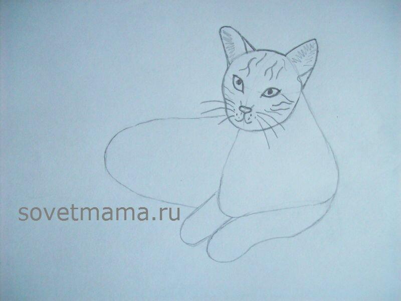 Кошачьи 39